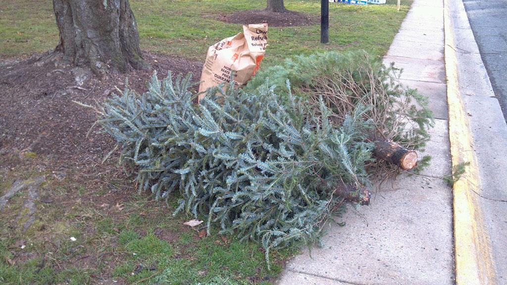 Christmas-tree-dump